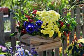 Holzkiste mit Paprika, Herbstchrysantheme und Stiefmütterchen am Gartenzaun