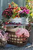 Herbstchrysanthemen, Lampionblume und Alpenveilchen in Zinkwanne