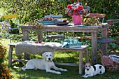 Sitzgruppe im Garten mit Strauß aus Dahlien, Astern, Fetthenne, Hagebutten und Pfaffenhütchen, Tablett mit Äpfeln, Zweig vom Zierapfel als Deko