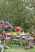 Sitzgruppe im Garten am Beet mit Aster und Apfelbaum