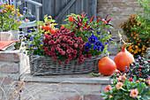 Herbstlich bepflanzter Korbkasten mit Chrysantheme, Chili 'Pretty in Purple', Lampionblume, Stiefmütterchen und Hornveilchen, Kürbisse