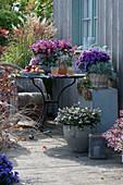 Herbst-Terrasse mit Strauchveronika 'Addenda', Aster, Purpurglöckchen, Salbei 'Tricolor', Currykraut, Polster-Fetthenne und Chinaschilf
