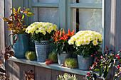 Chrysantheme 'Tipik White', Naschzipfel 'Medusa', Krug mit Zweigen von Zierapfel und Hagebutte, Marone, Chili 'Bolivian Rainbow'