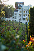 The vineyard at Clos Montmartre, Montmartre, Paris, France