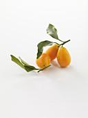A kumquat with leaves