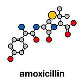 Amoxicillin beta-lactam antibiotic drug, molecular model