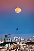 Moon and Belt of Venus over Lisbon