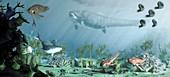 Devonian reef life, illustration