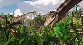 Diplodocus dinosaurs feeding, illustration