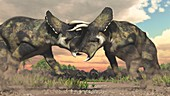 Nasutoceratops dinosaurs fighting, illustration