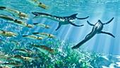 Plesiosaur and Belemnite marine animals, illustration