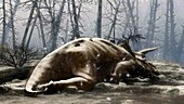 Dead Triceratops aftermath asteroid impact, illustration