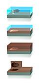 Fossil formation, illustration