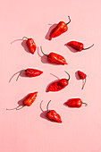 Fresh red chili peppers on a pink background
