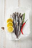 Frische Sardinen mit Zitrone, Rosmarin und Chilischote