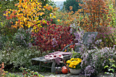 Liegestuhl am Herbstbeet mit Aster, Schneeball und Ahorn, Chrysantheme 'Rico Yellow' im Korb