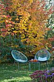 Moderne Sessel vor Eisenholzbaum im leuchtenden Herbstlaub