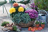 Korb mit Chrysanthemen und Strukturpflanzen, Knospenheide, Hornveilchen, Stiege mit Tulpenzwiebeln und Herbstlaub