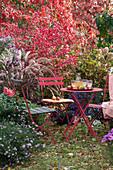 Sitzplatz im Herbstgarten am Beet mit Aster, Spindelstrauch, Ahorn, Rispenhortensie und Federborstengras