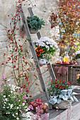 Vertikale Bepflanzung spart Platz: Töpfe mit Chrysantheme, Naschzipfel, Chili und Blattschmuckpflanzen an Holzleiter