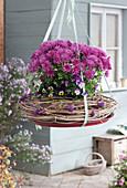 Chrysantheme und Hornveilchen als hängende Dek in Kranz aus Clematisranken, Beeren vom Liebesperlenstrauch