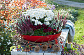 Chrysantheme Dreamstar 'Echo', Knospenheide 'Twin Girls', Hornveilchen 'Red with Blotch' und Salbei 'Tricolor' in roter Schale