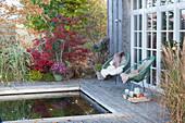 Herbst am Swimmingpool, Acapulco-Sessel mit Fell und Decke, Chrysanthemen, Gräser und Fächerahorn