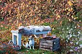 Bank mit Fell als Sitzplatz vor Zierapfelbaum, Korb mit Äpfeln, Hund Zula