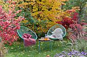 Moderne Sitzgruppe im Garten vor Eisenholzbaum und Fächerahorn