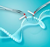 Gene editing, conceptual illustration