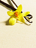 Vanilla beans with flower