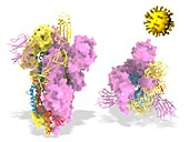 Covid-19 coronavirus spike protein, illustration