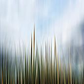 Grass, illustration