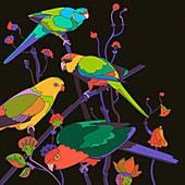 Parrots, illustration