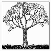 Tree in spring, illustration