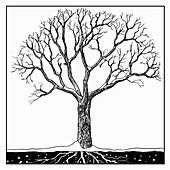 Tree in winter, illustration