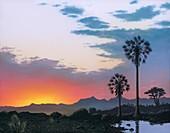 Sunrise on Hateg island, Cretaceous period, illustration