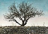 Tree after locust plague in Palestine in 1915