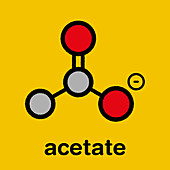 Acetate anion chemical structure, illustration