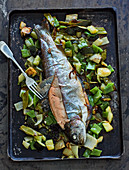 Oven-roasted trout with fennel, beans and pointed pepper