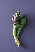 A Sardinian artichoke