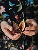 Fresh figs being halved