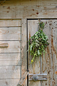 A bunch of medicinal herbs hanging to dry on a wooden door