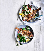 Grilled Fish with Celeriac and Fennel Salad