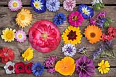 Tableau von einjährigen Sommerblumen