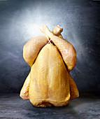 Fresh corn poulard
