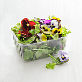 Mixed salad and edible flowers