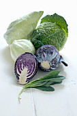 Different types of cabbage