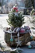 Korb mit Zuckerhutfichte, weihnachtlich dekoriert mit Kugeln und Sternen