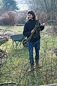 Herbstarbeiten im Garten: Mann räumt abgesägte Äste auf